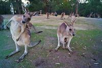 Australië Roadtrip deel I, 59