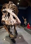 T. rex wijzen