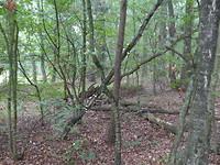 Paddenstoelen op boom