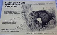 waarschuwingsbrief voor beren