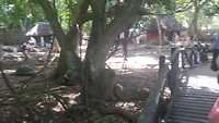 Landschildpadden op Prison Island