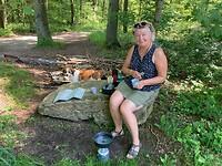 Picknick in de Vijlenerbossen
