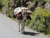 Kijk maar eens goed wat deze ezel draagt!!