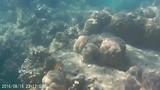 Snorkelen (kort filmpje)