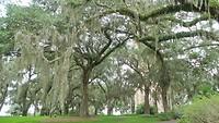spookie trees