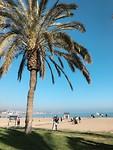 Trip 1 - Málaga 3