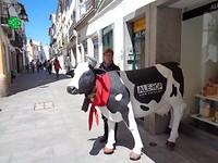 Deze koe loopt niet weg☺️😄