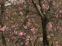 En als de lente komt dan.....
