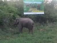 Mannetjes olifant langs de weg, even later liep hij pal langs onze open jeep weg.