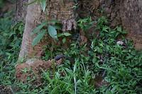 Een slang die zijn hol weer inkruipt (spot de staart!)