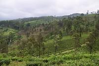 Wandelen door de theeplantages in Nuwara Eliya