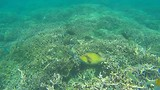 Snorkelen bij Pigeon Island