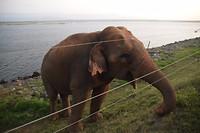 Olifant langs de weg, nog voor Udawalawe National Park