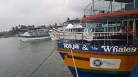 Onze boot voor het walvisspotten