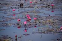 Het Inle Lake