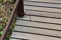 Een slang die wegschiet