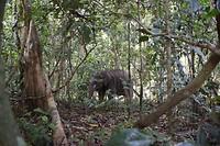 Verscholen in het regenwoud