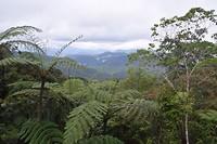 Cameron Highlands - dag 1