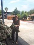 Zwaar die pineapples (binnenkant agave)