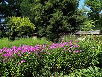 bloemen en Bijentuin  7