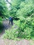 Omgevallen boom op het pad.