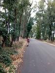 Dichterbij Monte Sacro, door een laan met Eucalyptusbomen.