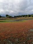 Natuurpark Maasduinen