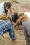 ... en gevonden in Huanchaco: de opgravingen van 296 kindoffers uit de Chimú periode.
