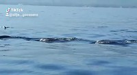 Dolfijn filmpje van Silje