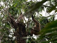 Een aap met een kleintje