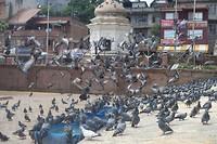@ Pashupatinath Tempelcomplex