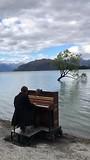 "Pianist bij ""The Wanaka Tree"""