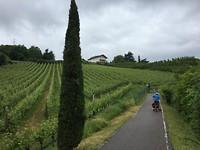 Fietsen door de wijngaarden