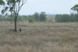 Waar zitten de kangeroes, zoekplaatje.