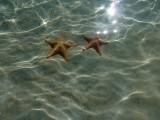 estrellas de mar