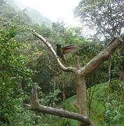 kolibrietje