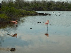 2 pretty flamingos