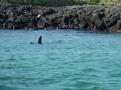 zwaaiende zeeleeuw