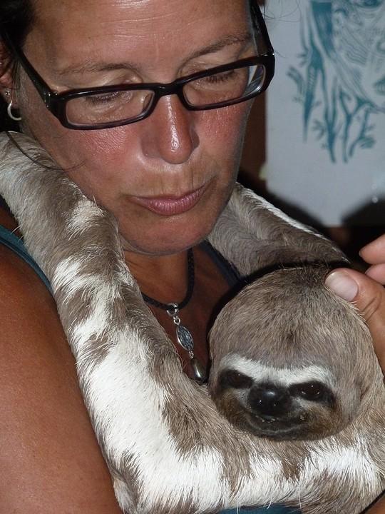 knuffel 'sloth'