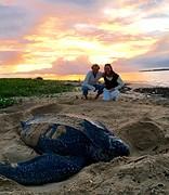 Leatherback en wij