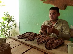 Rolling cigars