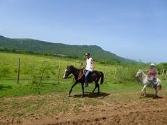 W te paard