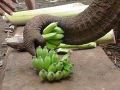 Bananen jatten