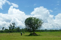 Wandelend door de rijstvelden