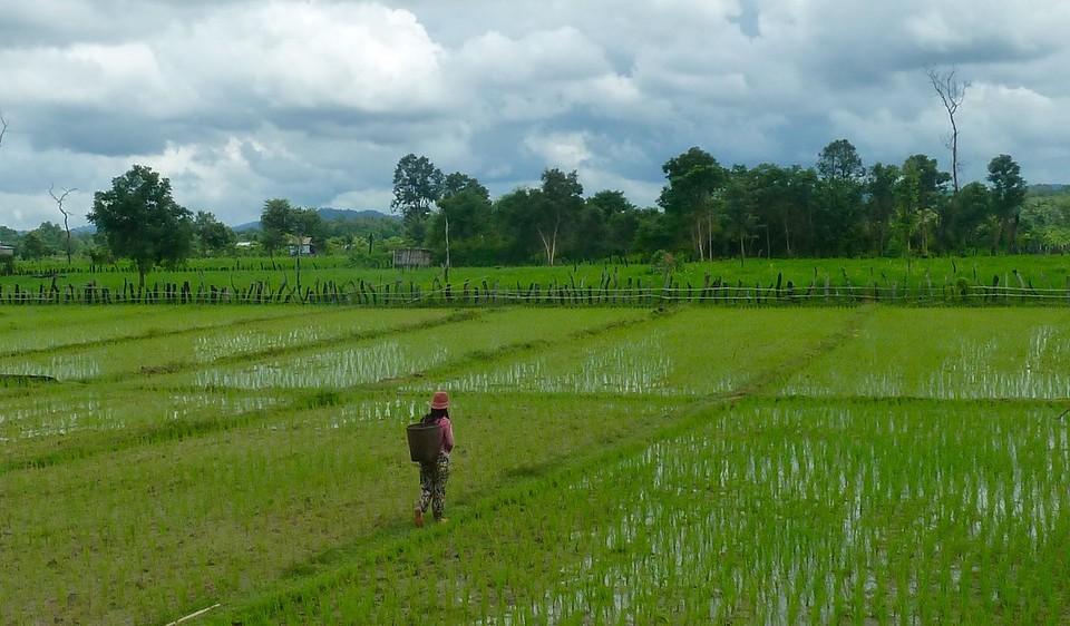 Meisje in de rijstvelden