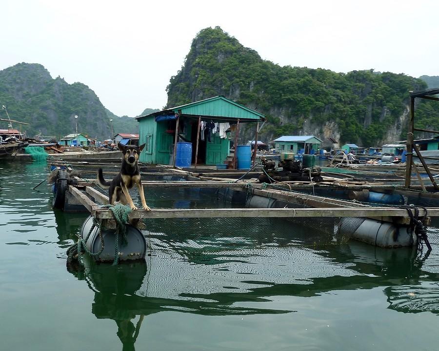 Vissershuis met waakhond