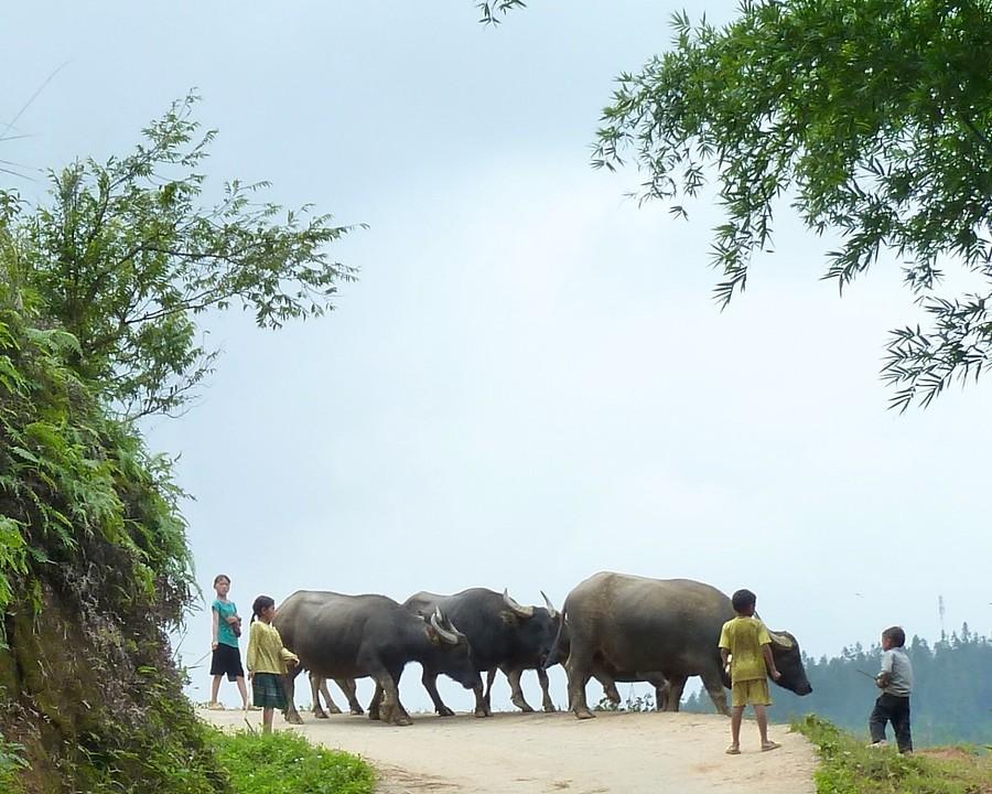 Kids en buffalos