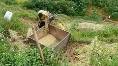 Jongen slaagt rijst stuk