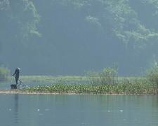 Vrouw bij haar rijst en garnalen veld