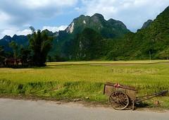 Werken in de rijstvelden + kar